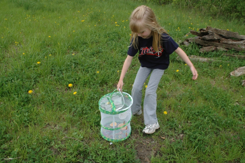 Linnea unzips the habitat; butterflies hesitate.
