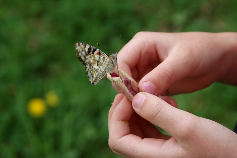 The last butterfly lingers on a wilted flower petal, then flies away.
