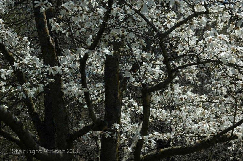 spring 060a