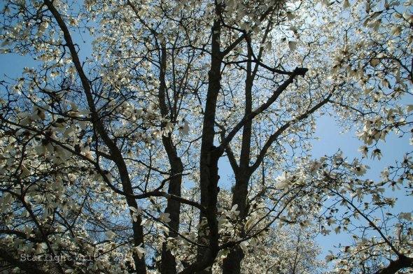 spring 066g
