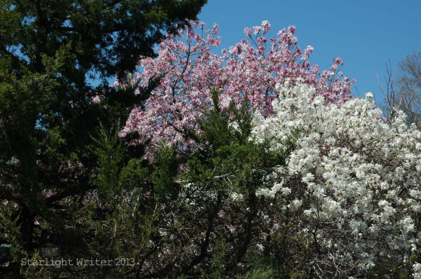 spring 070b