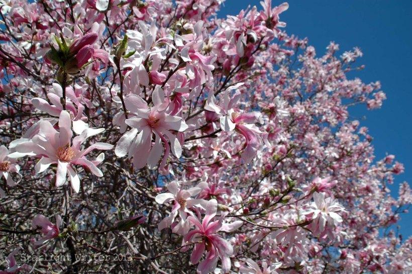 spring 078k