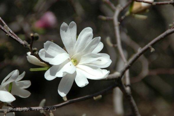 spring 081d