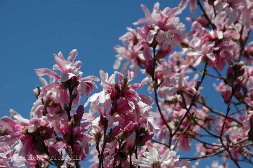 spring 083e