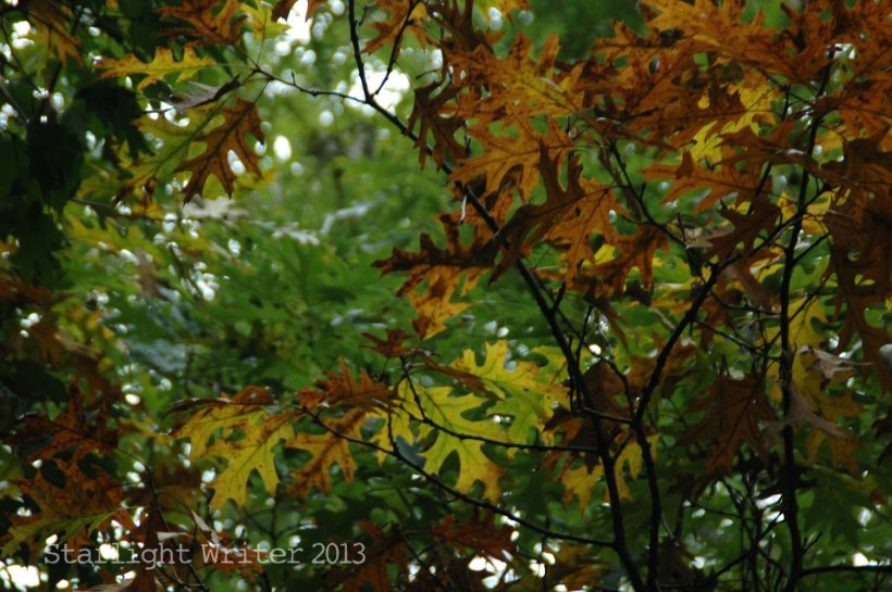 cricketsNleaves 034j