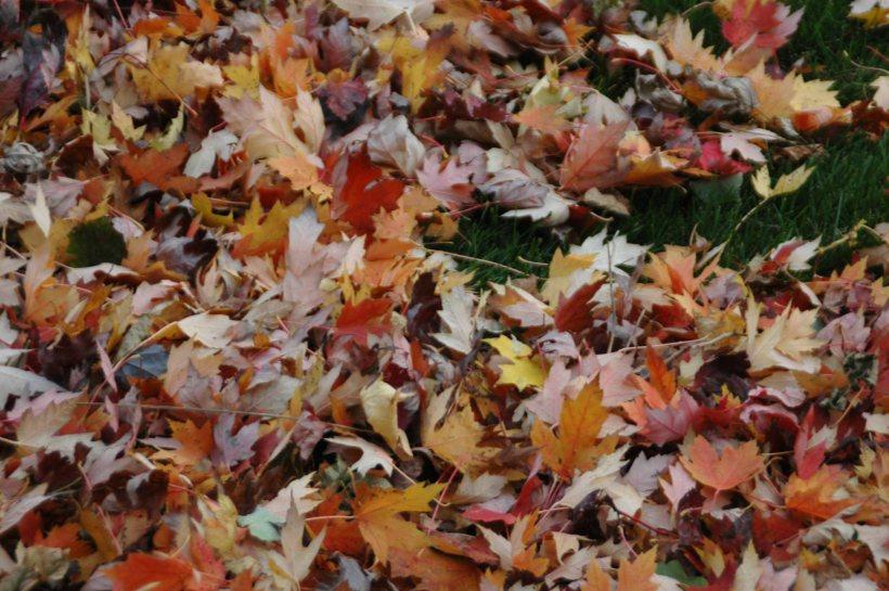 leaves047x