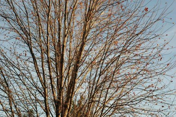 treebranches001x