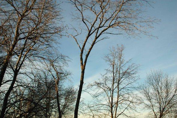 treebranches007x