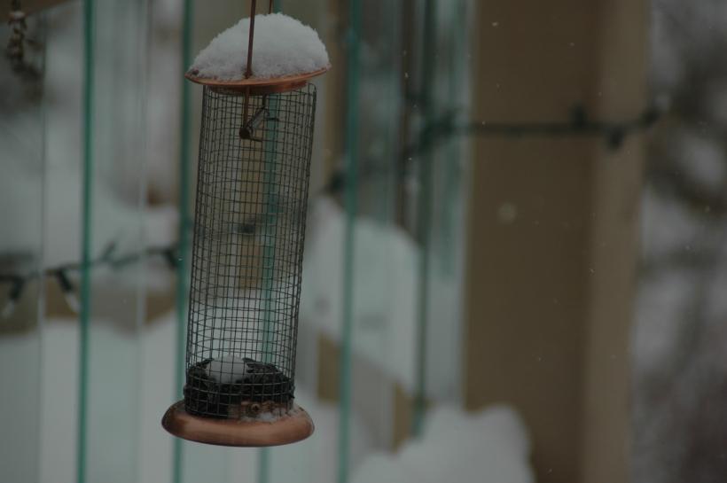 snowflakes 019