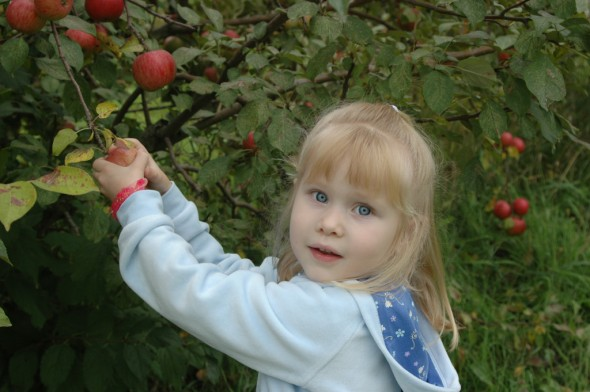 applepickin4
