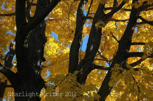 fallcolors 059102