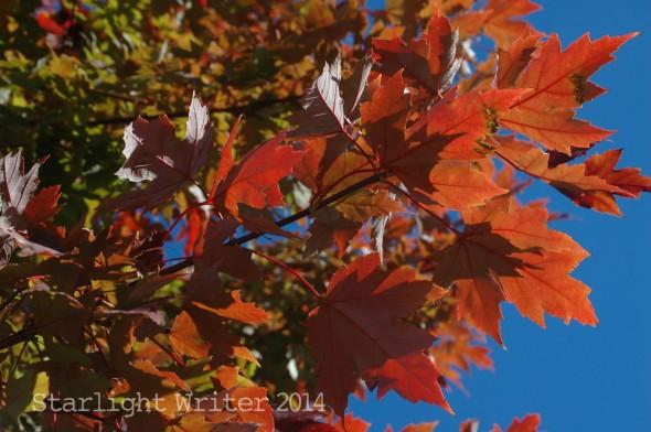 fallcolors 120111