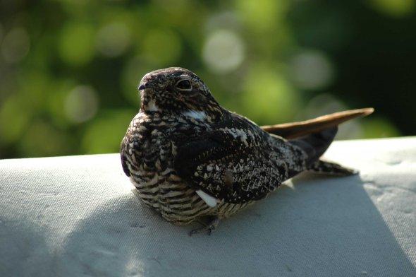 birdwatchin 067x